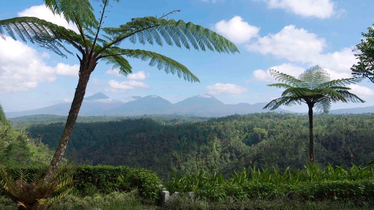 Puri Naga Toya View